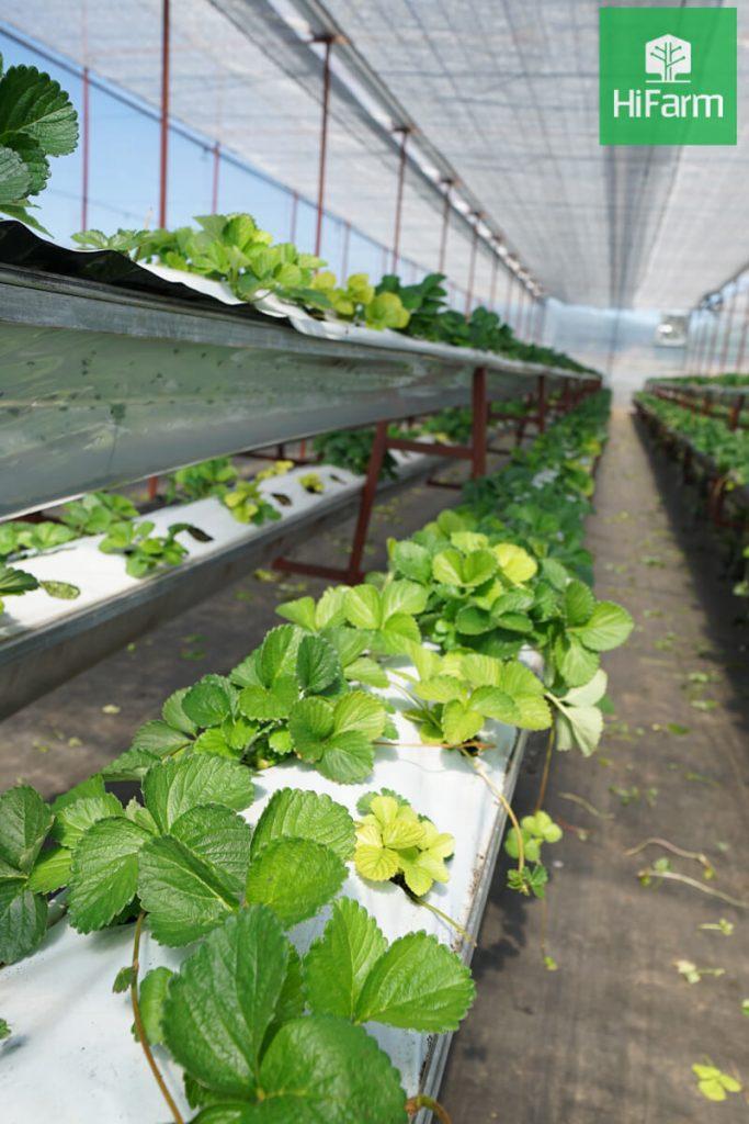Phát triển chuỗi nông sản an toàn tại Hà Nội