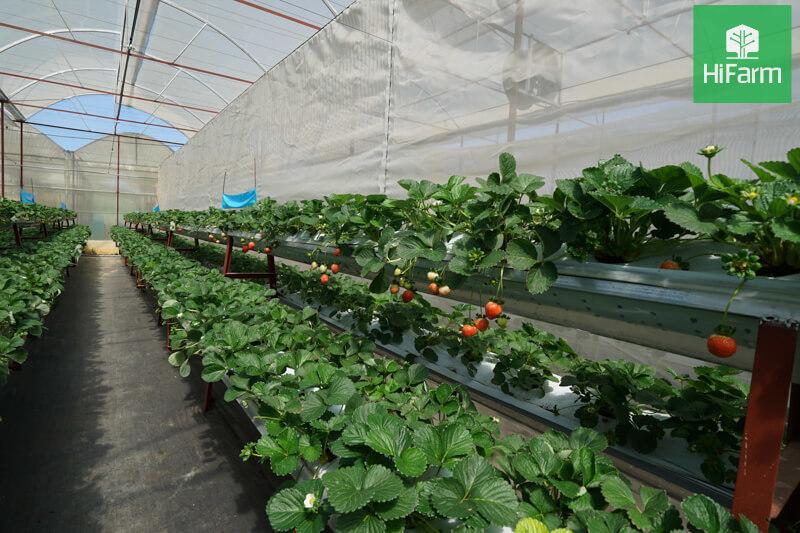 Dự định lập khu nông nghiệp thông minh 2,5 nghìn ha tại Thanh Hóa