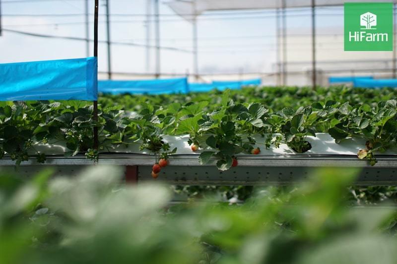 Thực hư trước loạt hàng hóa đóng nhãn mác thực phẩm hữu cơ