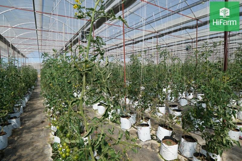 Nông sản sống khỏe nhờ công nghệ áp dụng vào nông nghiệp