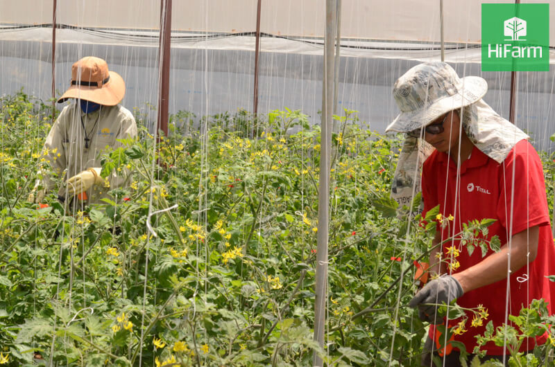 Nông dân cần tuân thủ lịch thời vụ: Vụ Đông Xuân 2020-2021