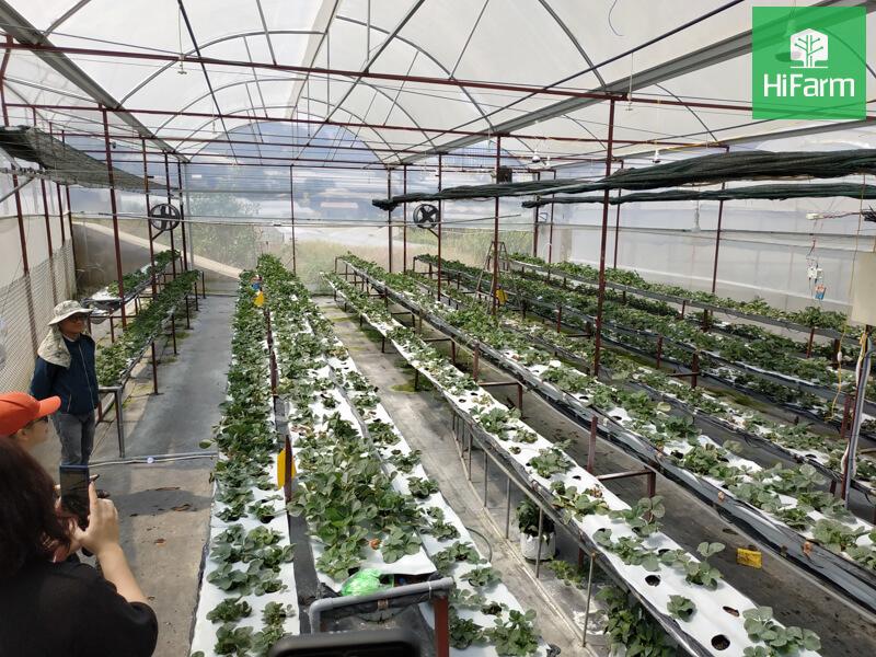 Các phương pháp điều khiển môi trường trong nhà kính