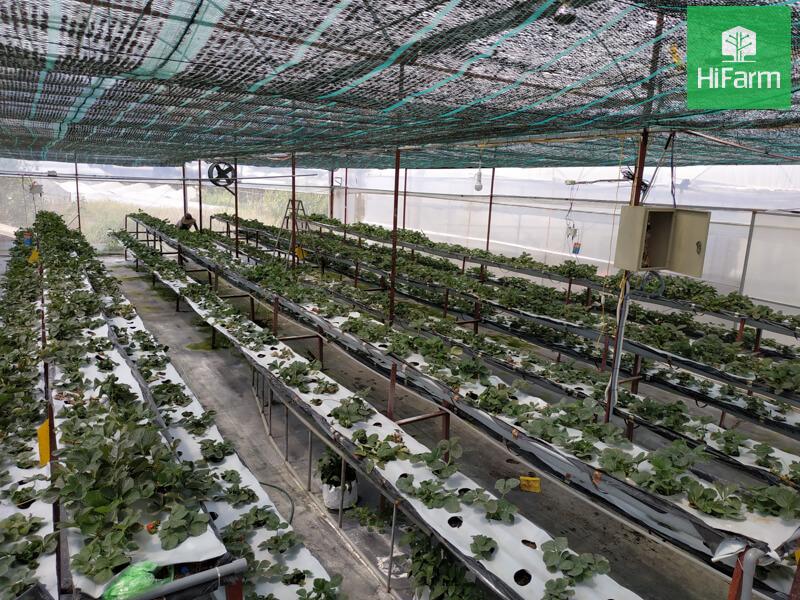 Nỗ lực nâng cao năng lực sản xuất nông sản việt