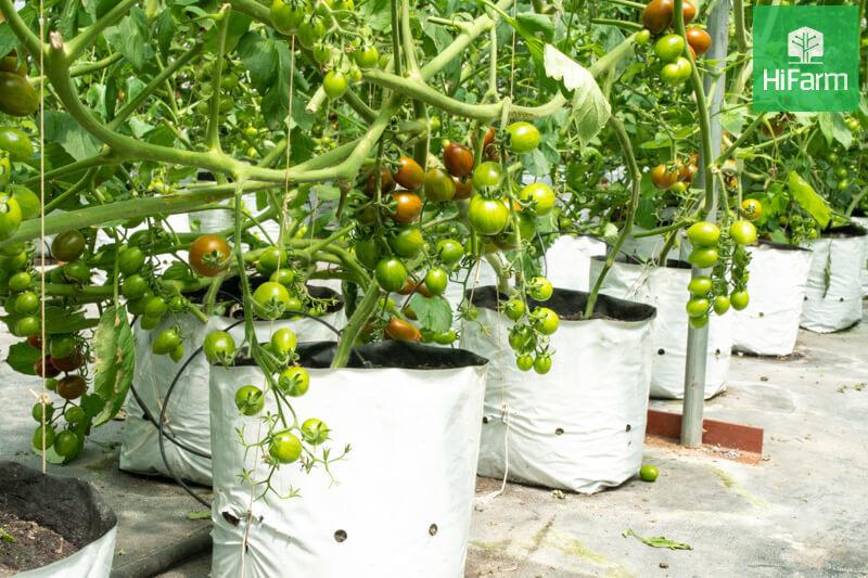 Doanh nghiệp hỗ trợ tiêu thụ nông sản Hải Dương