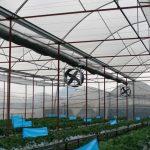 Yếu tố cốt lõi trong nông nghiệp công nghệ cao có phải là CNTT?