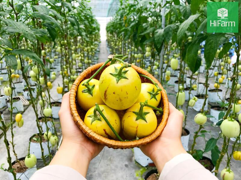 Tìm hiểu về giá trị dinh dưỡng của Dưa Pepino