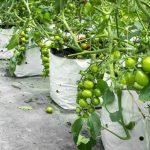 Vai trò của ngành nông nghiệp trong phát triển kinh tế xanh Việt Nam