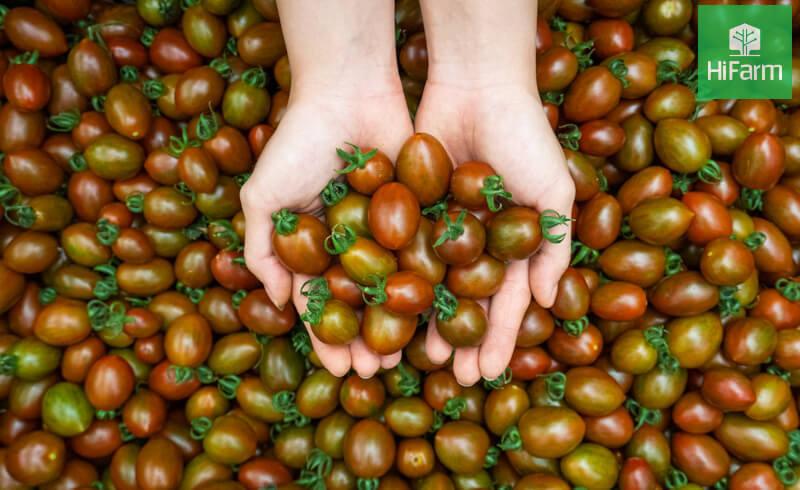 Cà cherry socola và món ăn bổ dưỡng cho sức khỏe