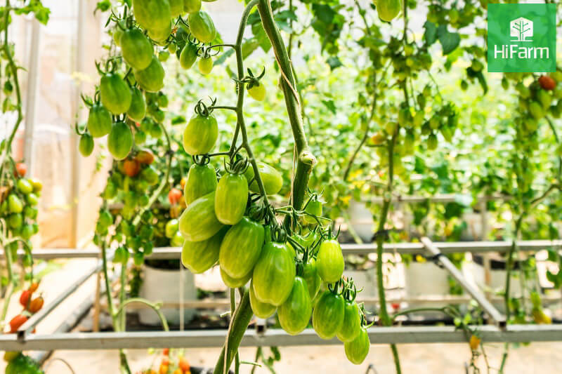 Quy trình kỹ thuật trồng cây trên giá thể
