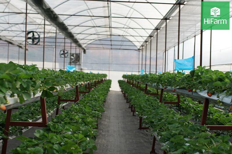 Trồng cây trên giá thể phổ biến trong kỹ thuật nông nghiệp