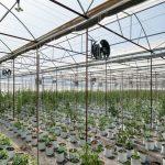 Nông nghiệp tác động đến môi trường như thế nào?