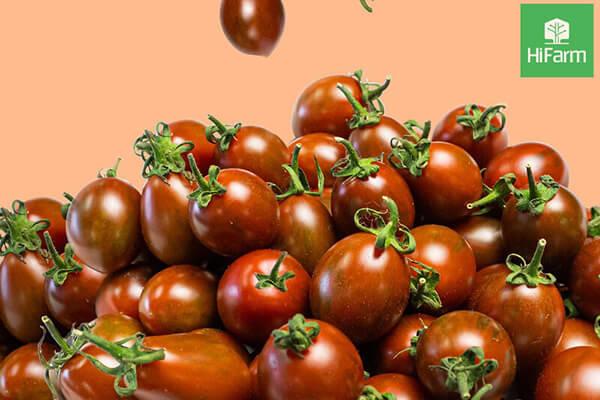 Nguồn gốc xuất xứ của cà chua cherry (cà chua bi)