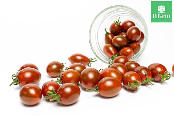 Nguồn gốc xuất xứ của cà cherry
