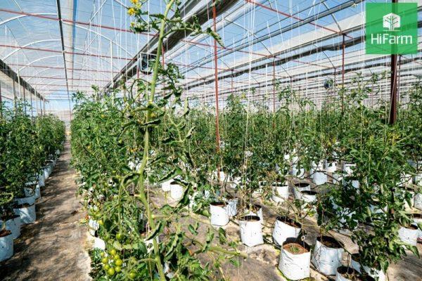 Nông nghiệp thông minh - Nông nghiệp 4.0