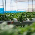 Sản phẩm nông nghiệp ứng dụng công nghệ cao là gì?