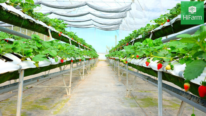 Tại sao phải tìm hiểu VietGAP trồng trọt ?