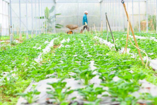 Lâm Đồng quyết làm nông nghiệp hữu cơ 'chuẩn'