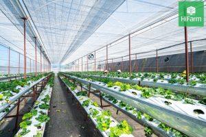 Đồng Tháp nở rộ sản xuất nông nghiệp hữu cơ công nghệ cao