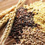 Giá lương thực thế giới đạt mức cao nhất trong 10 năm qua